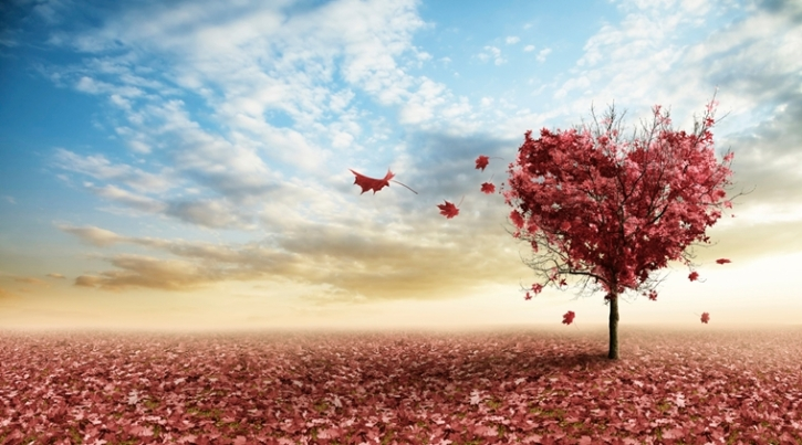 love-autumn-tree_759_thinkstockphotos-177812216